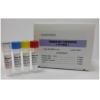 弯曲菌多重PCR检测试剂盒