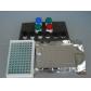 大鼠CD30elisa试剂盒生产